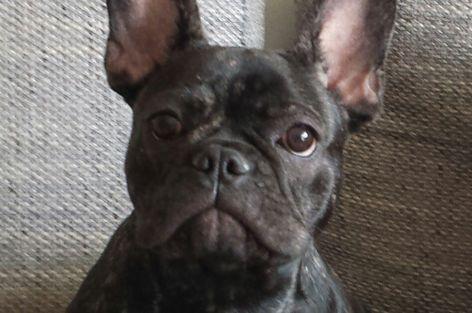 Tierkommunikation Hund Connie