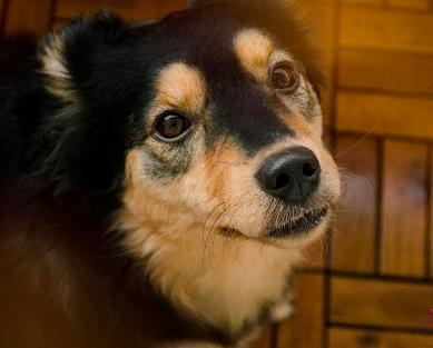 Tierkommunikation Feedback - Maja